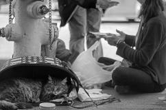 Untitled, Cat, San Francisco, 2014